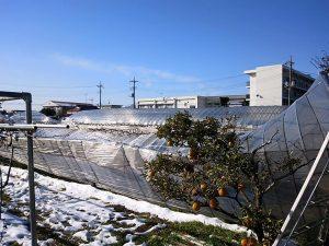 渋谷農園 ハウス 雪1