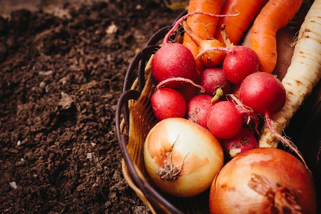 どういった野菜を作っていくのか?【無肥料自然栽培農家 明石農園 研修8日目(2016年2月15日)】