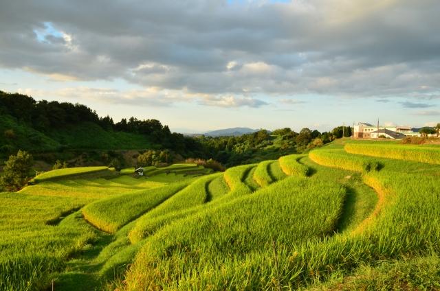 全ては土から生まれる!【無肥料自然栽培農家 明石農園 研修32日目(2016年3月27日)】