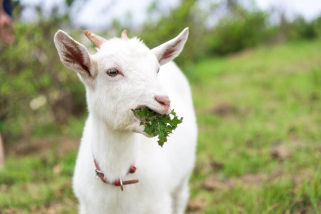 食事が楽しければ人生が楽しくなる!【無肥料自然栽培農家 明石農園 研修87,88日目(2016年7月4,5日)】