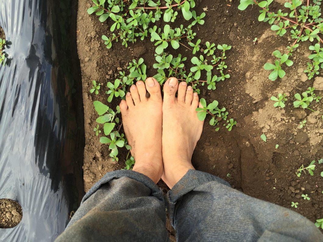 お寺に行かなくても畑なら無料で瞑想できます。【無肥料自然栽培農家 明石農園 研修107日目(2016年8月17日)】