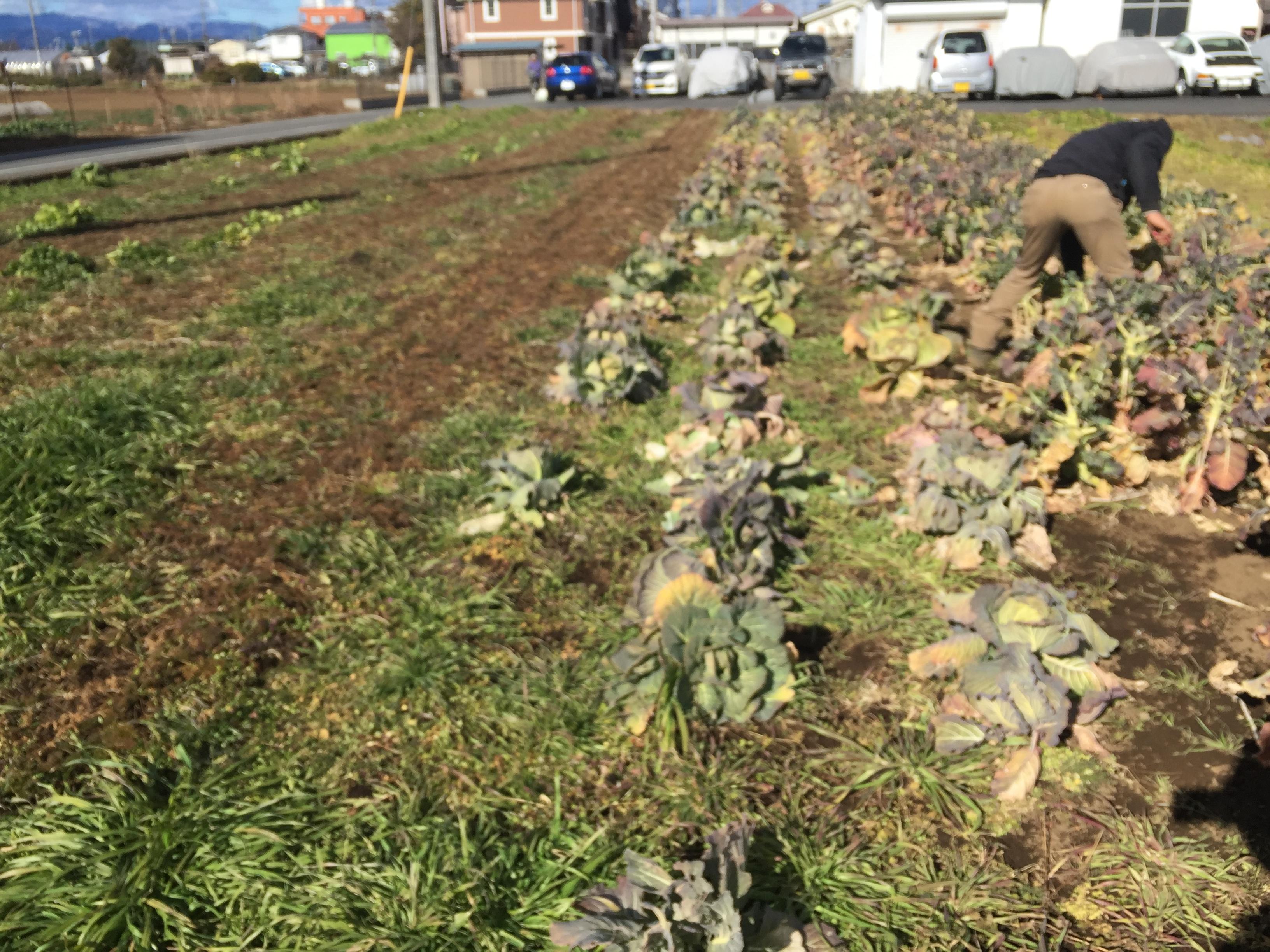 寒いけど野菜のためには我慢する自然栽培農園、「井垣農園」さんで研修してきました♪