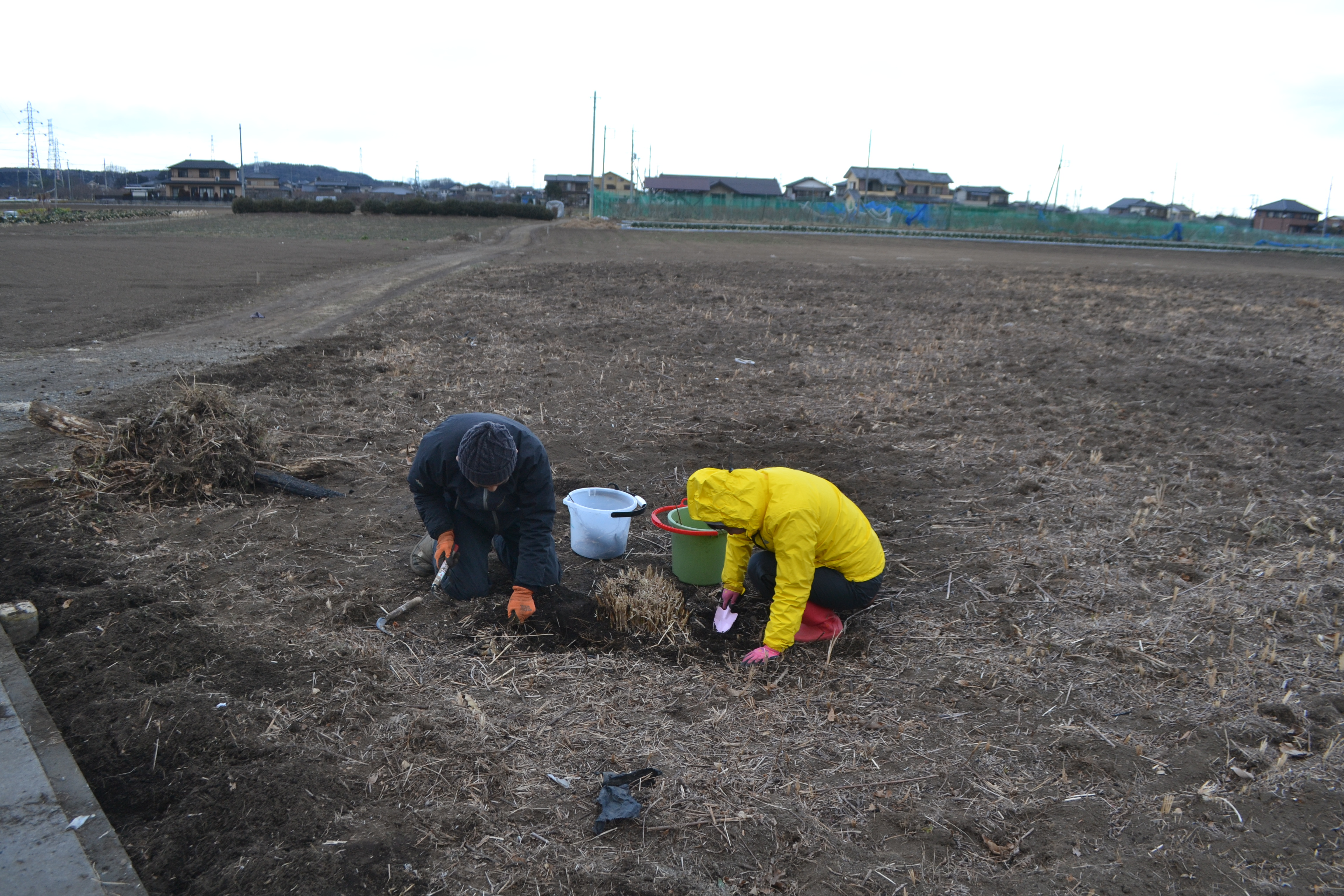 畑の開墾 その3(根っことり)