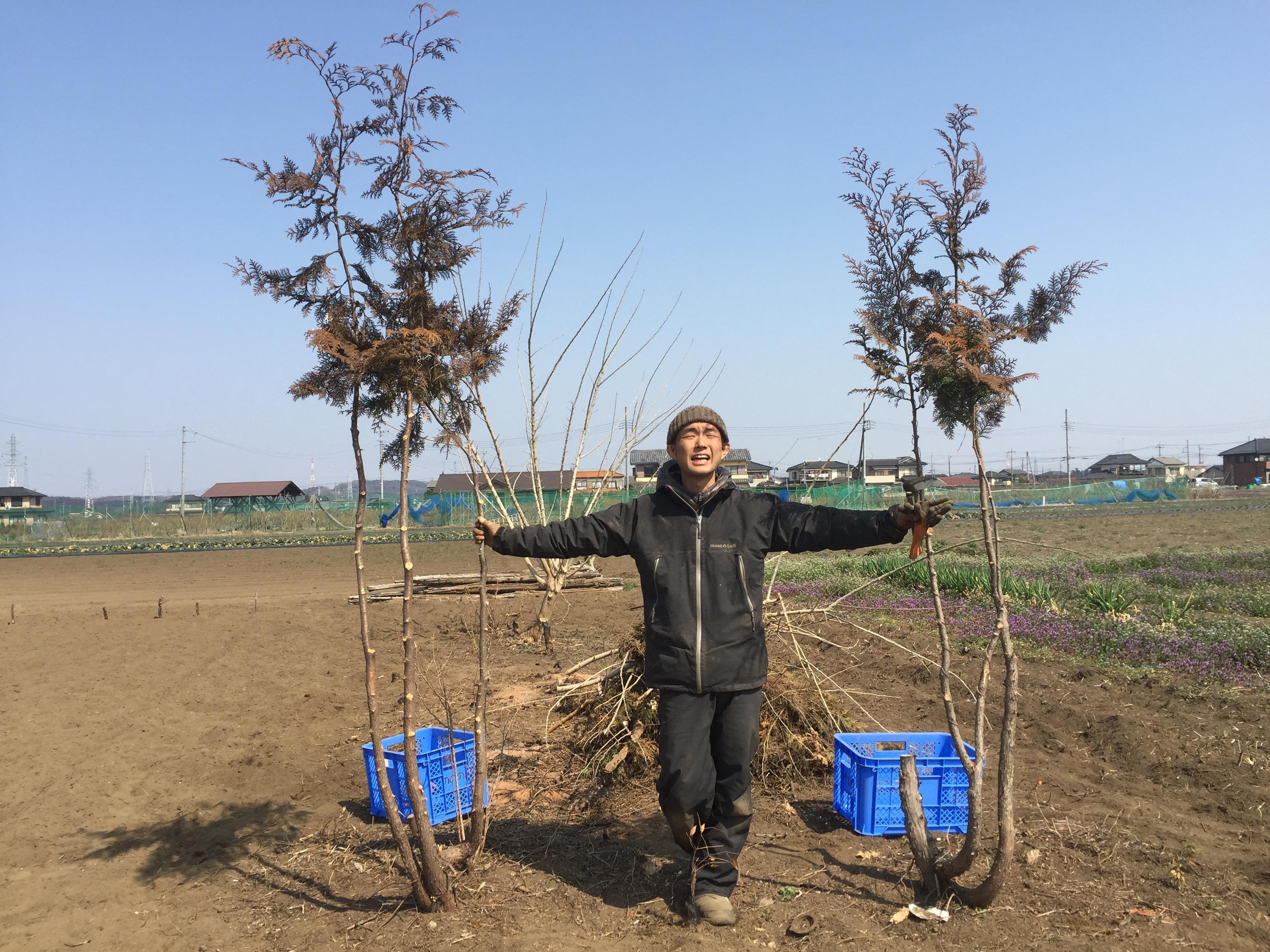 畑の木を切るのは簡単だが、うちは共存をしようと思う!