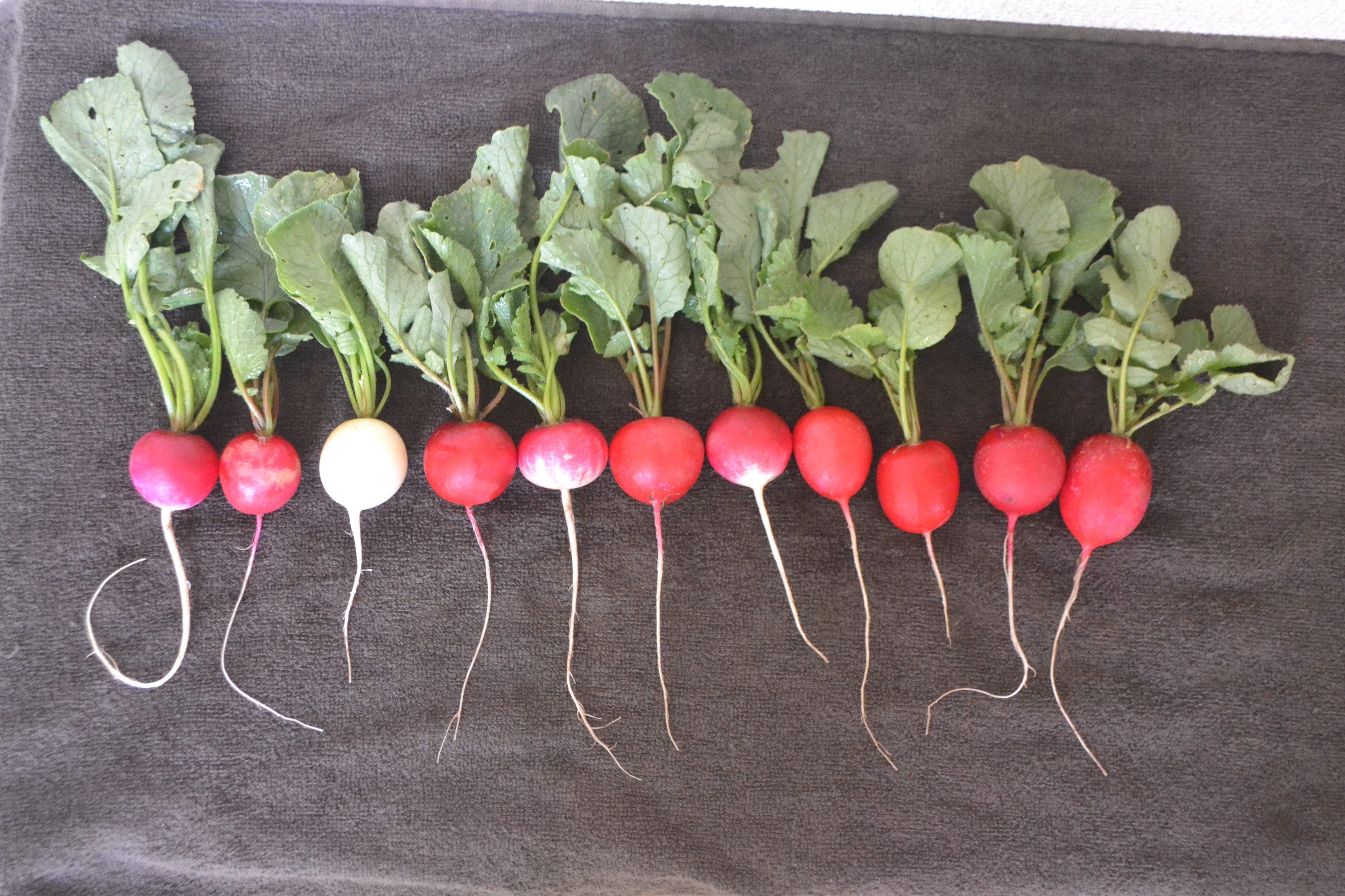 ののの農園の初収穫野菜は♪