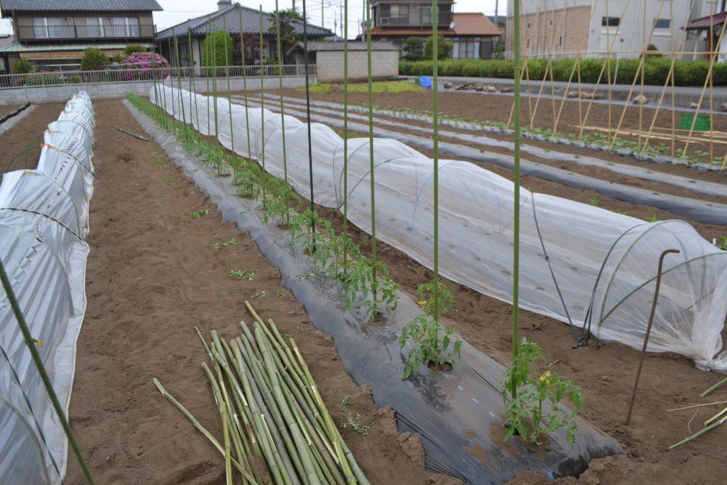トマトに使用した支柱