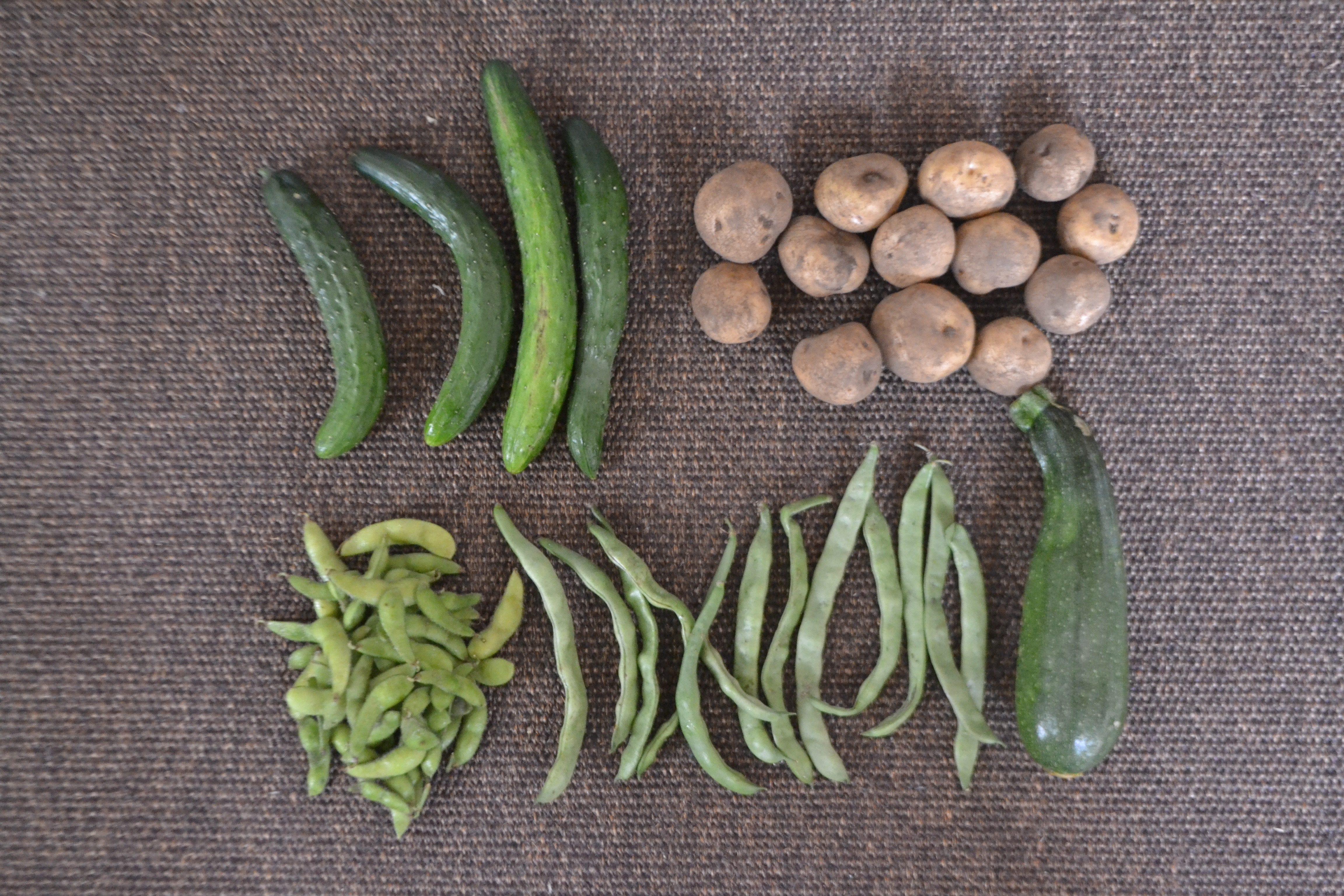 早くおいしい野菜を食べてもらいたいので野菜セット開始しますー!!!