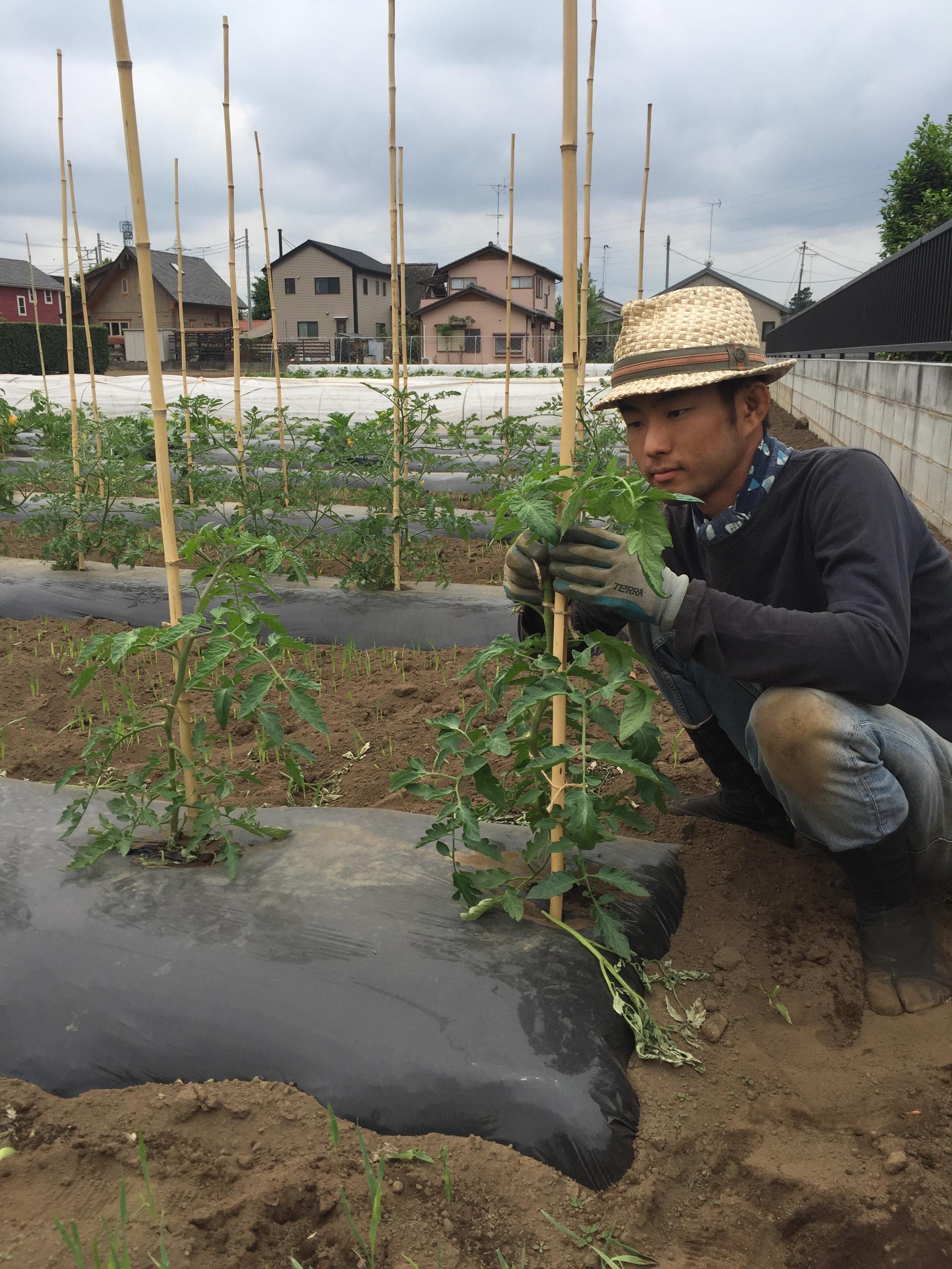 農業初めてわかった手のかかる野菜トマト!