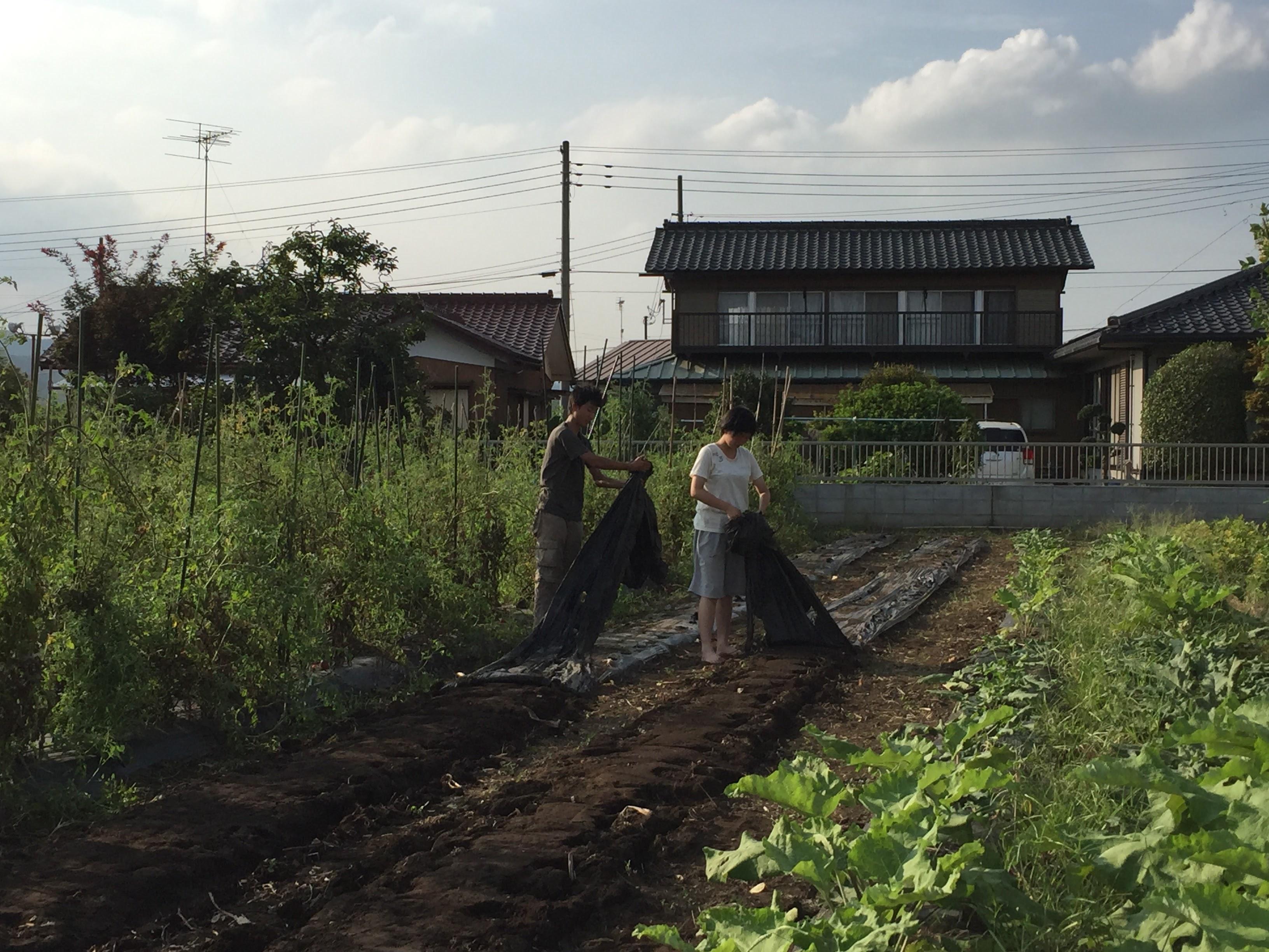 現役高校生が畑に来たよ〜^^