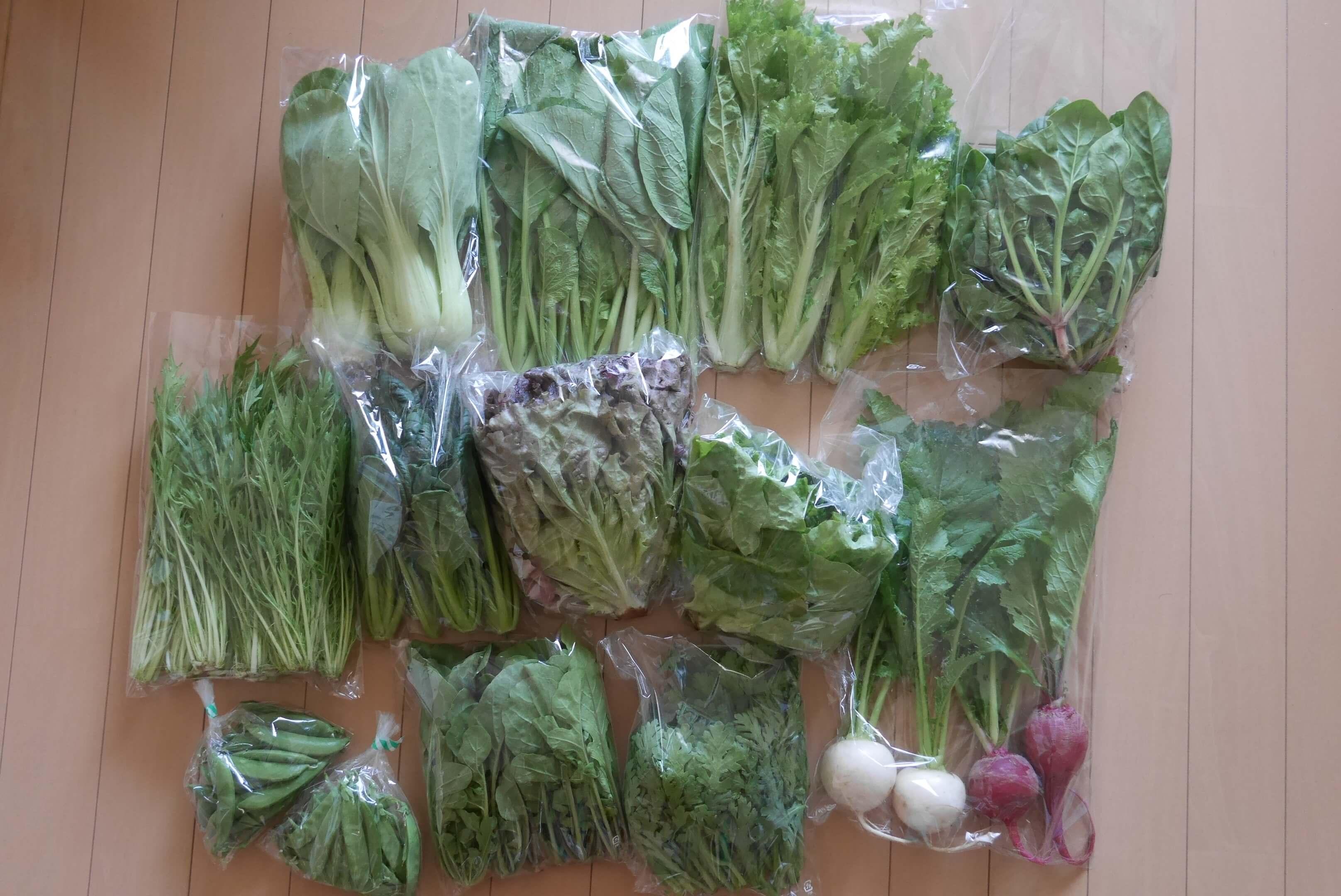 昨日の野菜セットナミサイズ!