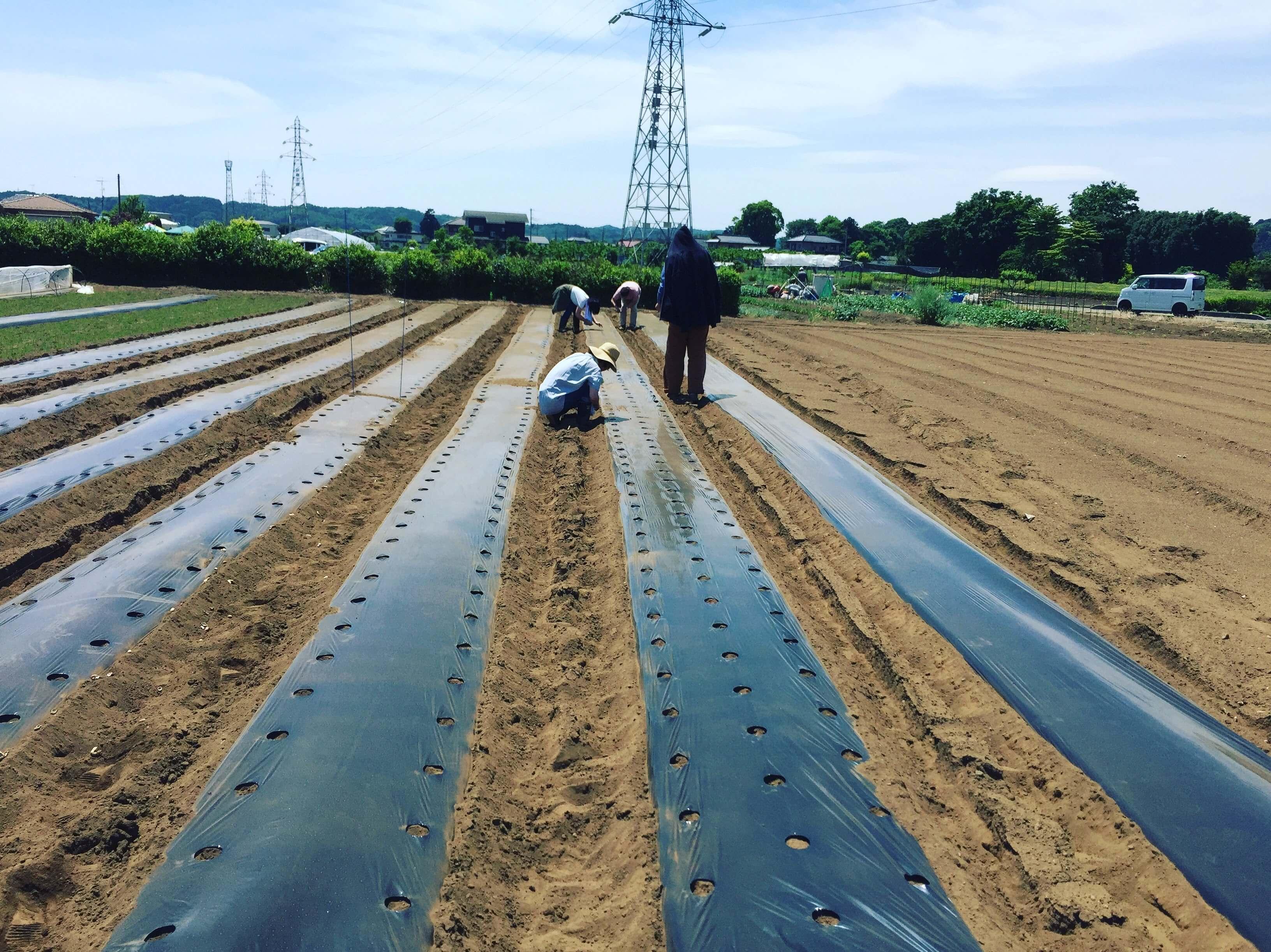 第3回自然栽培農業体験レポ♪ 落花生など植え付けしました!