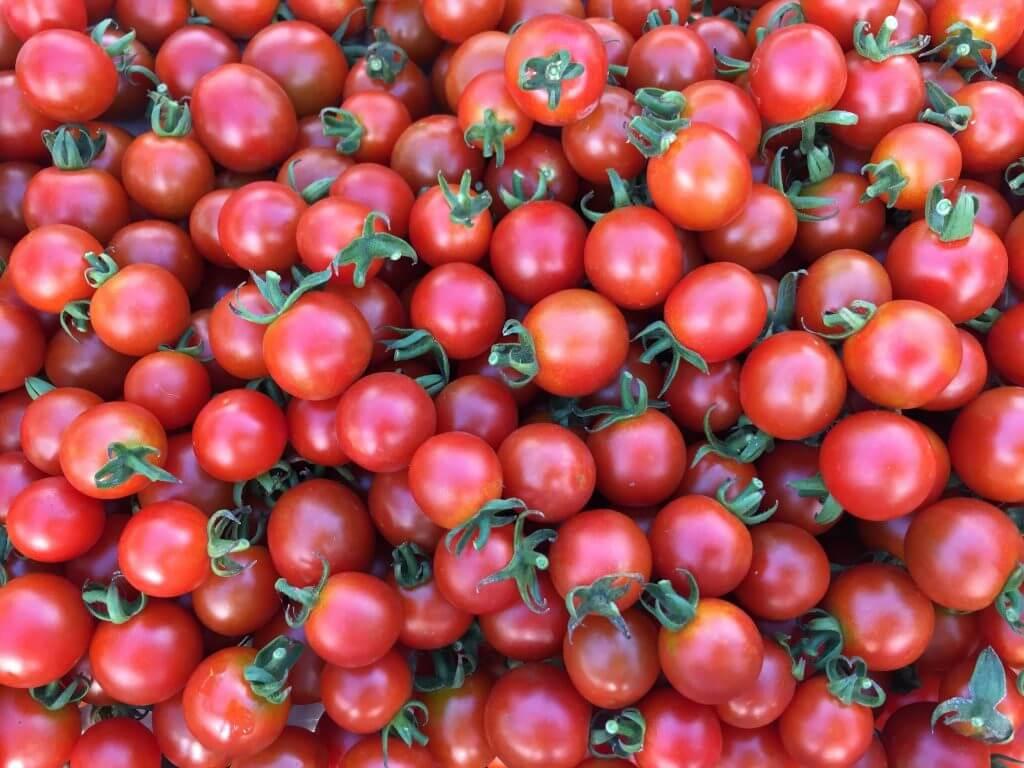 トマト ステラミニトマト