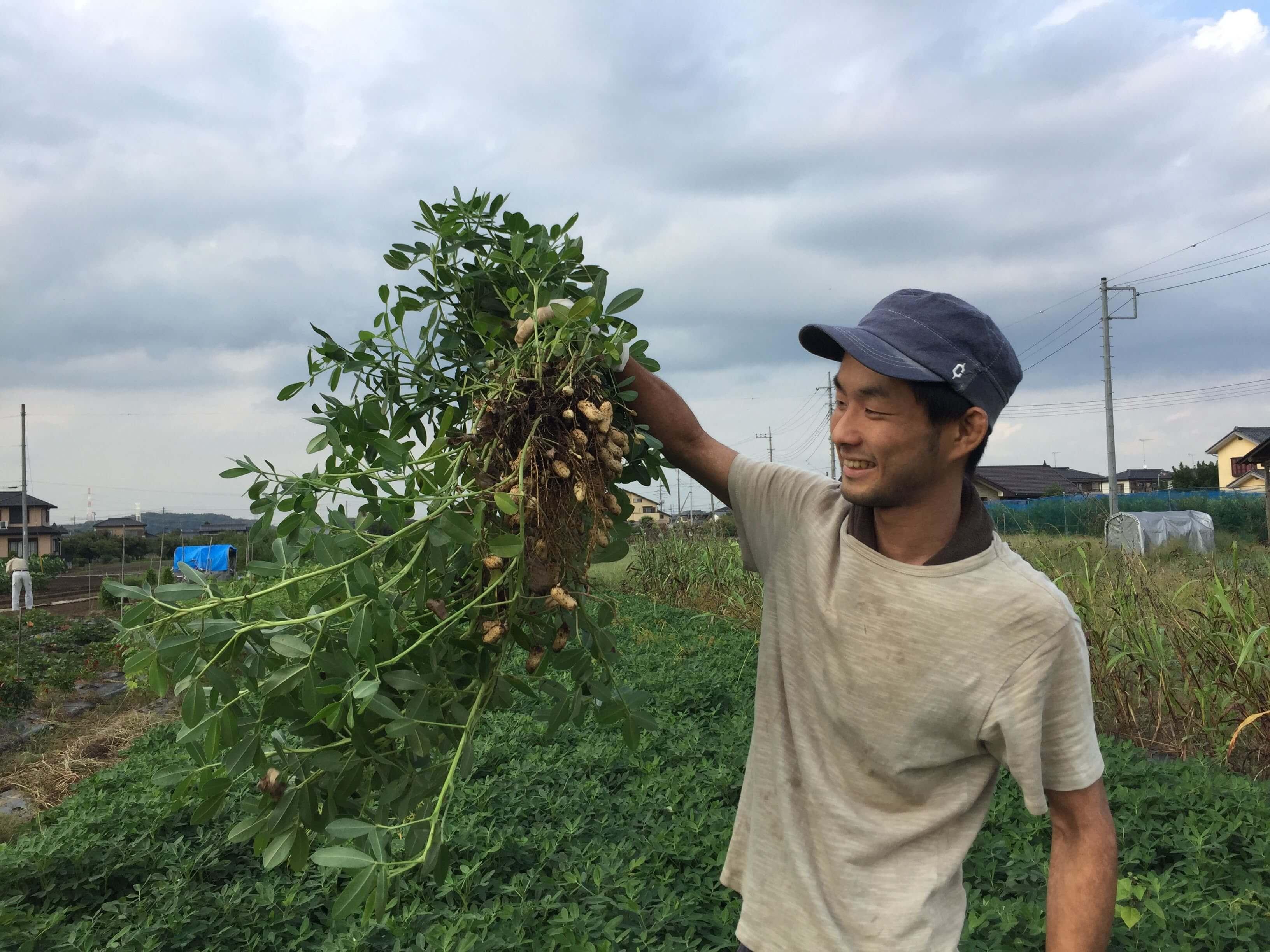 旬が短い【自然栽培】生落花生(ピーナッツ)!おすすめの茹で方・レシピ