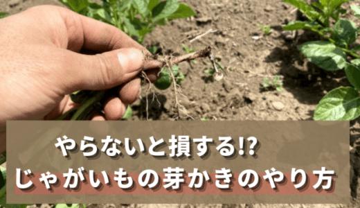 【自然栽培】知らないと損する!?じゃがいもの芽かきのやり方を解説