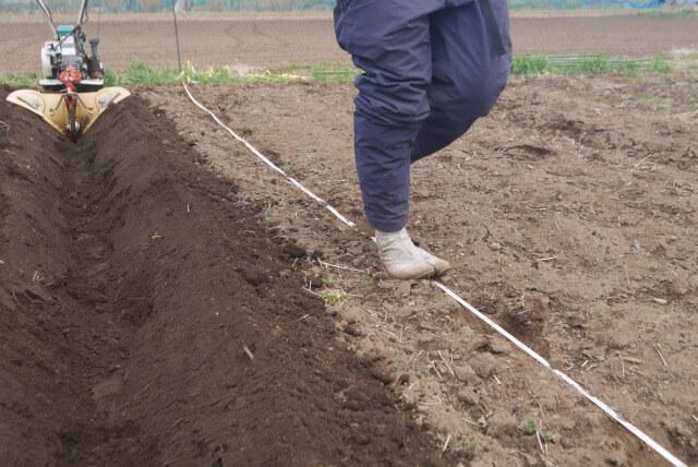 ジャガイモ栽培 溝掘り